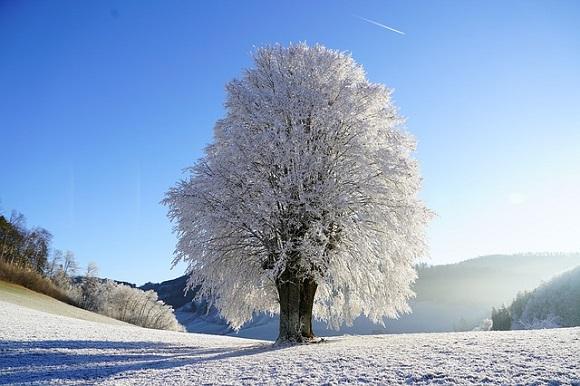 成人式 関連銘柄 冬